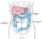 Causas del colon irritable