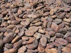 Proceso de elaboración del chocolate