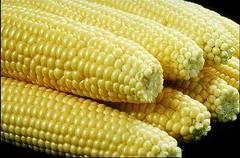 Propiedades medicinales del maíz, elote o choclo